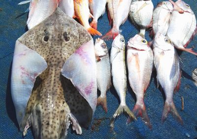 Fish catch in Sorrento