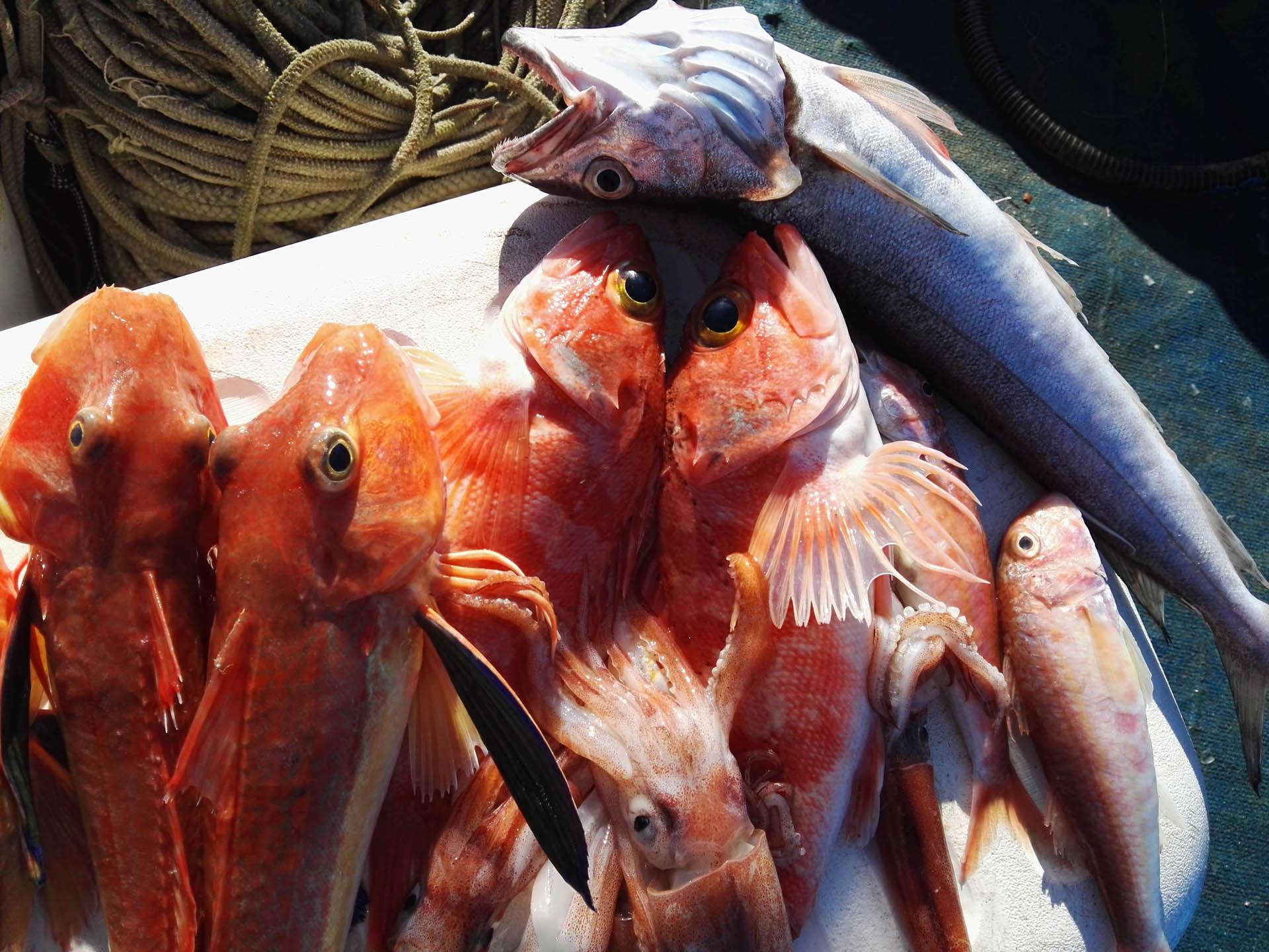 Pescaturismo a Capri con partenza da Sorrento