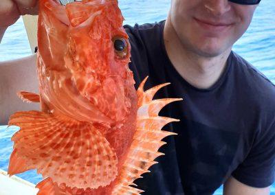 Uno scorfano pescato a Capri durante l'escursione