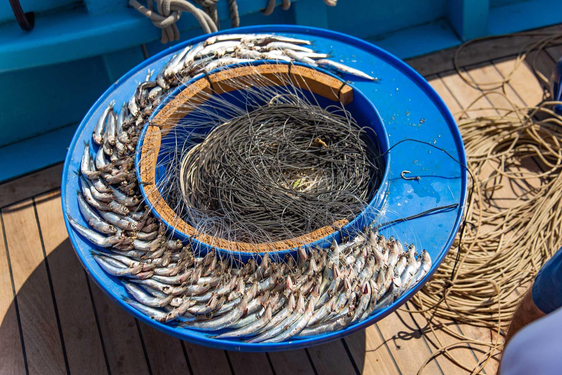 Pescaturismo con coffa a Capri